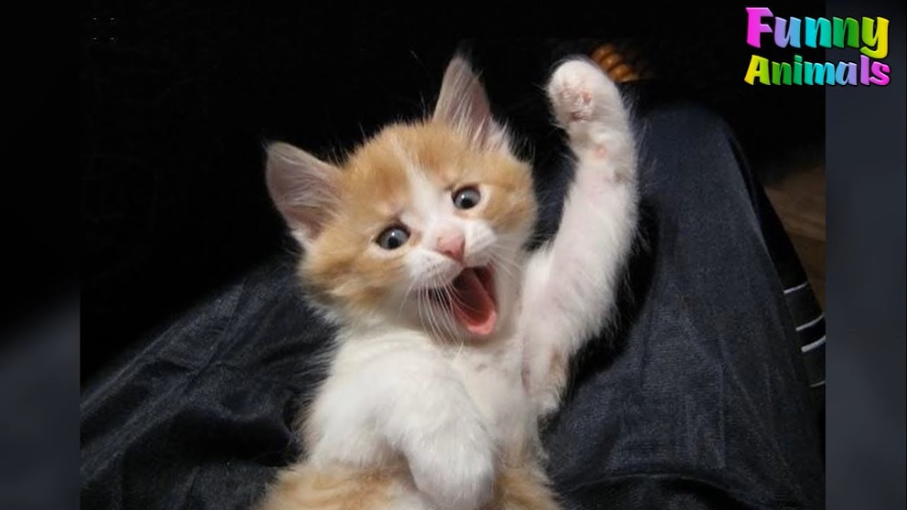Cute Kittens And Funny Kitten Videos Compilation 2017 – Kitten Videos Today